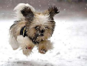 065-doggy-winter-running